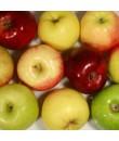 Organic Spiced Apple Flavor Powder