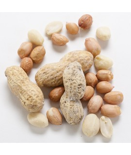 Organic Nut Fragrance Emulsion (Water Soluble)