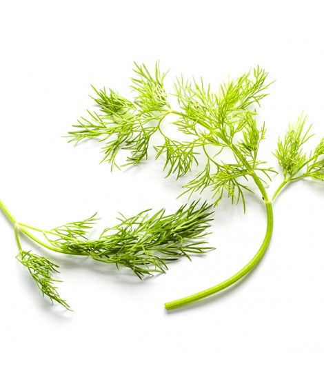 Organic Dill Flavor Extract
