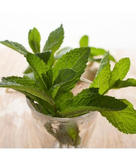 Peppermint Fragrance Oil (Oil Soluble)