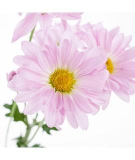 PMS/Menopause Massage Oil