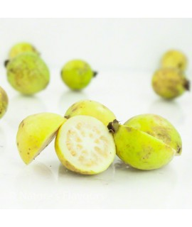 Organic Guava Flavor Extract