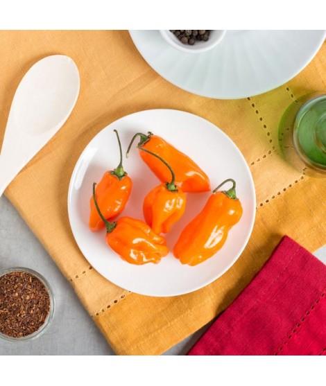 Organic Habenero Flavor Extract