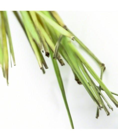 Organic Lemongrass Flavor Extract