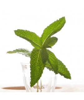 Organic Mint Coffee Syrup