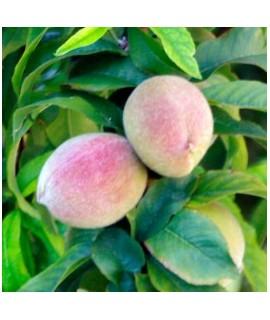 Organic Decaf Peach Melba Flavored Coffee Beans (Shade Grown)