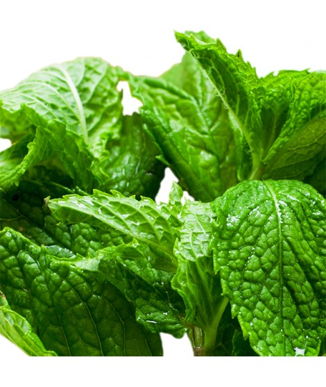 Organic Mint Flavor Extract - TTB Approved