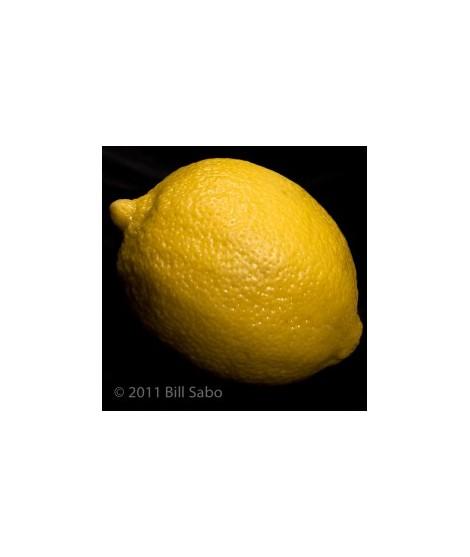 Lemon Flavored Italian Soda Syrup