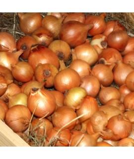 Organic Onion Flavor Extract