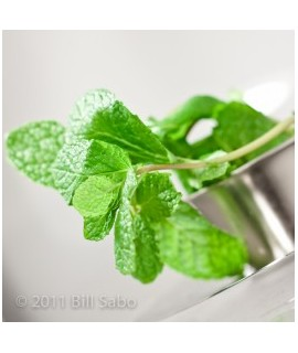 Spearmint Flavored Italian Soda Syrup