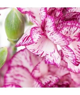 Organic Hawaiian Bouquet Fragrance Emulsion (Water Soluble)