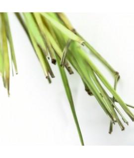 Organic Peppermint Lemongrass Flavor Extract