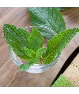 Organic Spearmint Essential Oil
