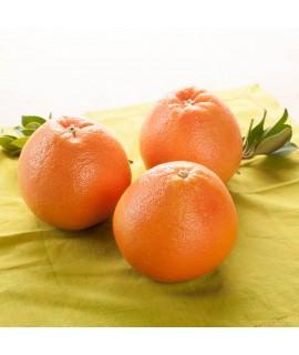 Organic Grapefruit (Florida Cold Pressed) Essential Oil