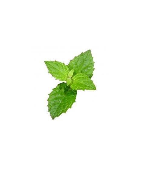 Organic Menthol Coffee and Tea Flavoring