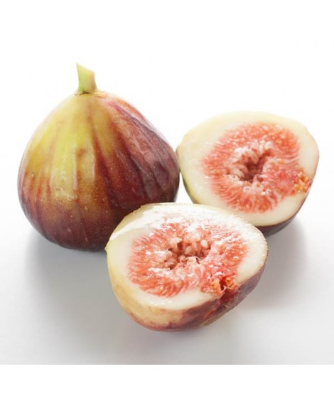 Fig Flavor Oil for Lip Balm