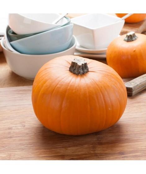Pumpkin Flavor Oil for Lip Balm