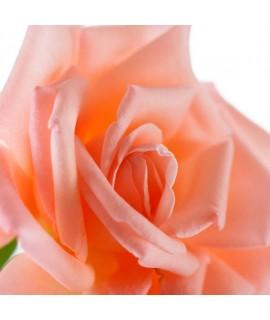 Rose Flavor Oil for Lip Balm