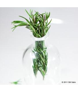 Rosemary Extract, Organic