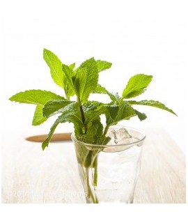 Organic Peppermint Coffee and Tea Flavoring