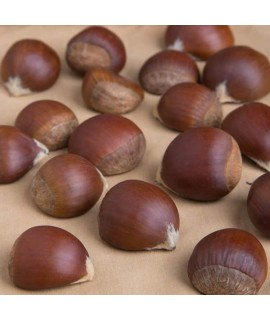 Chestnut Flavor Extract Without Diacetyl