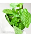 Organic Spearmint Coffee and Tea Flavoring