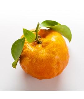 Tangerine Extract, Organic