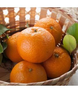 Sante Mandarin Orange Essential Oil
