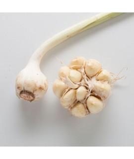 Garlic Tincture