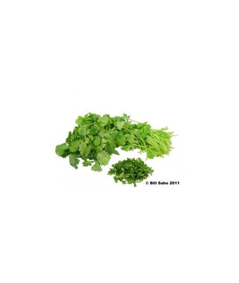 Organic Cilantro Flavor Powder (Sugar Free, Calorie Free)