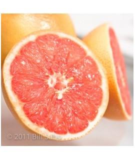 Organic Grapefruit Flavor Powder (Sugar Free, Calorie Free)