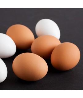 Egg Shade Food Color 5x Fold