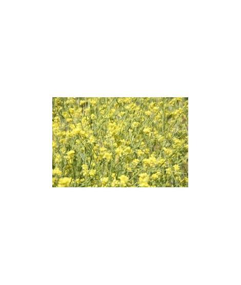 Organic Mustard Seed Flavor Powder (Sugar Free, Calorie Free)