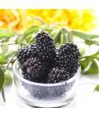 Blackberry Flavor Powder
