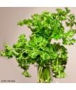 Organic Parsley Flavor Powder (Sugar Free, Calorie Free)