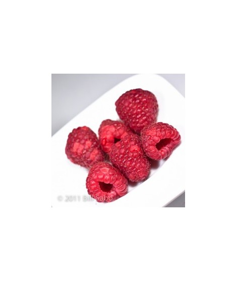 Organic Raspberry Truffle Flavor Powder (Sugar Free, Calorie Free)
