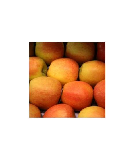 Organic Spiced Apple Flavor Powder (Sugar Free, Calorie Free)